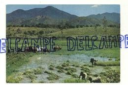 République Malgache. Les Hauts Plateaux Repiquage Du Riz. Editions Hoa-Qui 3423 - Madagascar