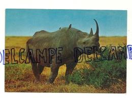Rhinocéros Noir. Afrique. Rinoceronte Nero. CECAMI 1021 - Rhinocéros