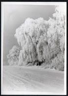 C0150 - Foto - Winterlandschaft Schnee Schneelandschaft - Vereiste Bäume - Fotografie