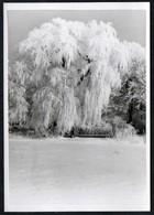 C0151 - Foto - Winterlandschaft Schnee Schneelandschaft - Vereiste Bäume - Fotografie