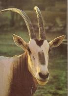 Soudi Arabia & Circulated, Arabian Oryx, Rub Al Khali, Riyadh To South Shields England 1998 (5777) - Saudi Arabia