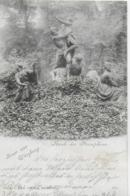 AK 0095  Gruss Aus Würzburg - Raub Der Persephone / Verlag König Um 1898 - Wuerzburg