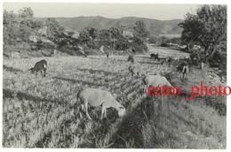 Photo Région Reillanne - Moutons, Chèvres - Luoghi