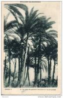 Missions Salésiennes. Indes. Récolte De La Seve De Palmier - Missions