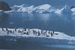 Territoire Des Terres Australes Et Antarctiques Françaises, Terre Adélie - TAAF : Terres Australes Antarctiques Françaises