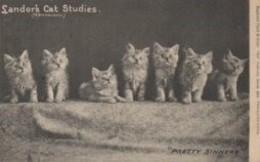 CHATS  Landor's Cat Studies - Katten