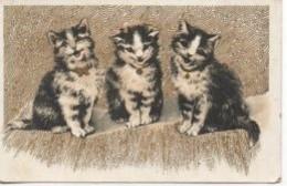 "CHATS 3 Chats ""souriants"" - Katten"