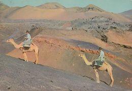 Spanien - Lanzarote -  Montana Del Fuego - Camel - Nice Stamp Cept - Lanzarote