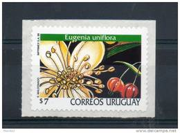 Uruguay. Orchidée - Uruguay