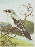 Népal Carte Maximum 1979 Oiseau 352 - Népal