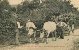 Thèmes - Lot N°383 - Agriculture - Cartes Sur Le Thème De L'agriculture - Lots En Vrac - Lot De 34 Cartes - 5 - 99 Karten