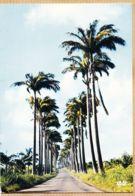 X97196 Allée DUMANOIR Guadeloupe 1970s HACHETTE ANTILLES Cliché P. CHARTRON 5487 - Guadeloupe