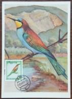 Albanie - Carte Maximum / CM 1965 - YT N°800 - Faune / Oiseaux Migrateurs - Albanie