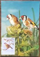Albanie - Carte Maximum / CM 1964 - YT N°705 - Faune / Oiseaux - Albanie