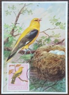 Albanie - Carte Maximum / CM 1964 - YT N°706 - Faune / Oiseaux - Albanie