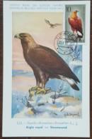 Albanie - Carte Maximum / CM 1967 - YT N°948 - Faune / Oiseaux De Proie - Albanie