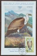 Albanie - Carte Maximum / CM 1967 - YT N°950 - Faune / Oiseaux De Proie - Albanie
