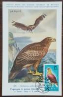 Albanie - Carte Maximum / CM 1967 - YT N°949 - Faune / Oiseaux De Proie - Albanie