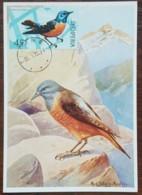 Albanie - Carte Maximum / CM 1972 - YT N°1314 - Faune / Oiseaux - Albania