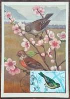 Albanie - Carte Maximum / CM 1972 - YT N°1311 - Faune / Oiseaux - Albania