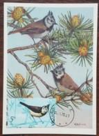 Albanie - Carte Maximum / CM 1972 - YT N°1310 - Faune / Oiseaux - Albanie