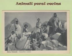 AFRICA ORIENTALE - SOMALIA - COLONIA - CAMMELLIERI CUNAMA -CARTOLINA - LT60-029 - Somalia
