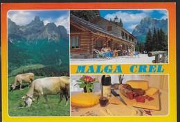 MALGA CREL - S. MARTINO DI CASTROZZA - VIAGGIATA 1996 - Alberghi & Ristoranti