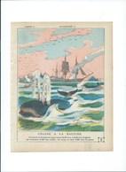 BALEINE WHALE (Chasse à) (hunting)  Protège-cahier  Couverture 220 X 175  Bon état 3 Scans - Protège-cahiers