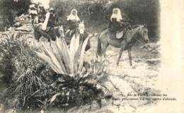 Amerique - Perou - Sur La Puna Sommet Des Andes Péruviennes - C 2038 - Pérou