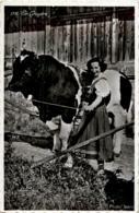 En Gruyere - Kuh - Vaches