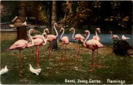 Basel - Zoo - Flamingo - BS Bâle-Ville