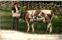 Simmentaler Zuchtvieh - Kuh - BE Berne