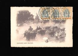 C.P.A. D ELEPHANTS AU SIAM... - Cartes Postales