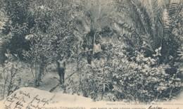 Y84.  Deutsch-Südwestafrika - Eine Partie In Den Gärten Windhuks - 1906 - Namibie