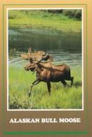 Alaska Alaskan Bull Moose - United States