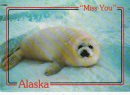 Alaska Alaskan Arctic Harp Seal - United States