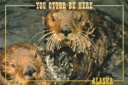 Alaska Alaskan Sea Otter - United States