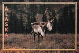 Alaska Alaskan Caribou - United States