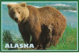Alaska Alaskan Brown Bear With Cub - United States