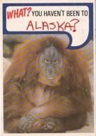 Alaska Humour Orangutan What You Haven't Been To Alaska 1986 - United States