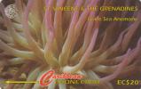 ST. VINCENT & THE GRENADINES(GPT) - Giant Sea Anemone, CN : 142CSVC, Tirage 20000, Used - Saint-Vincent-et-les-Grenadines