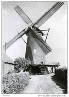 BERENDRECHT (Antwerpen) - Molen/moulin - Historische Opname Van De Buitenmolen Omstreeks 1935. TOP! - Antwerpen