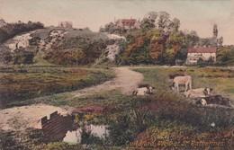 GUILDFORD. VIEW AT ST CATHERINES. FARM COWS VINTAGE LANDSCAPE. F FRITH & Co. CIRCA 1900s NON CIRCULEE- BLEUP - Surrey