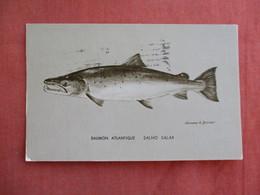 Fish Saumon Atlantique      Ref 3091 - Fish & Shellfish