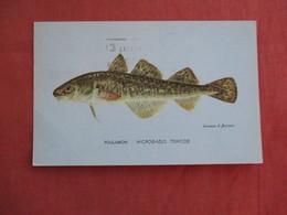 Fish  Poulamon   Ref 3091 - Fish & Shellfish