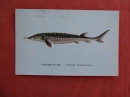 Fish  Esturgeon De Mer  Ref 3091 - Fish & Shellfish