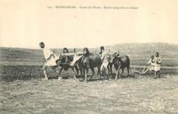 MADAGASCAR  FERME DE L'IBOKA BOEUFS MALGACHES AU LABOUR - Madagaskar