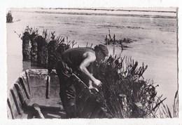 Carte Postale Photo  L' Aiguillon Sur Mer La Cueillette Des Moules Sur Les Bouchots - Altri Comuni