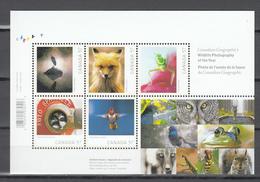 Canada 2010,5V In Block,birds,vogels,vögel,oiseaux,pajaros,uccelli,aves,fox,vos,MNH/Postfris(L3399) - Papegaaien, Parkieten