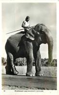 ELEPHANT And Mahout, Ceylon. - Éléphants